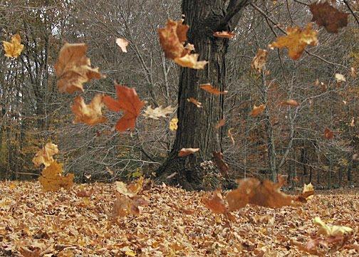 Poetry: September Wind