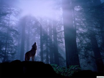 f052d-wolf_howling_at_moon