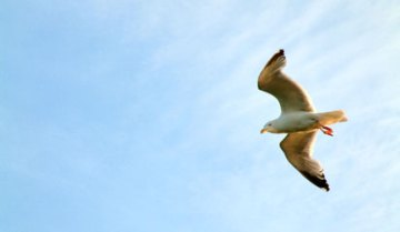 a4cc0-seagullsky