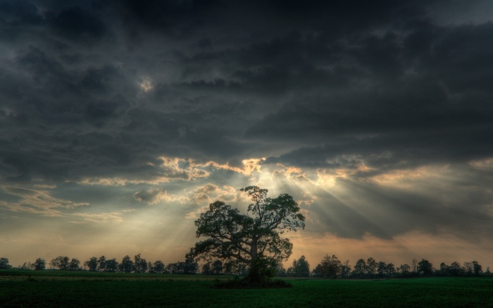 tree-clouds-sky-ray-overcast-nature