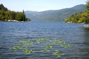 lake-whatcom.com