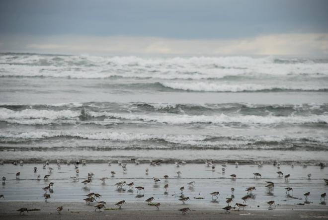 birds-ocean-shores